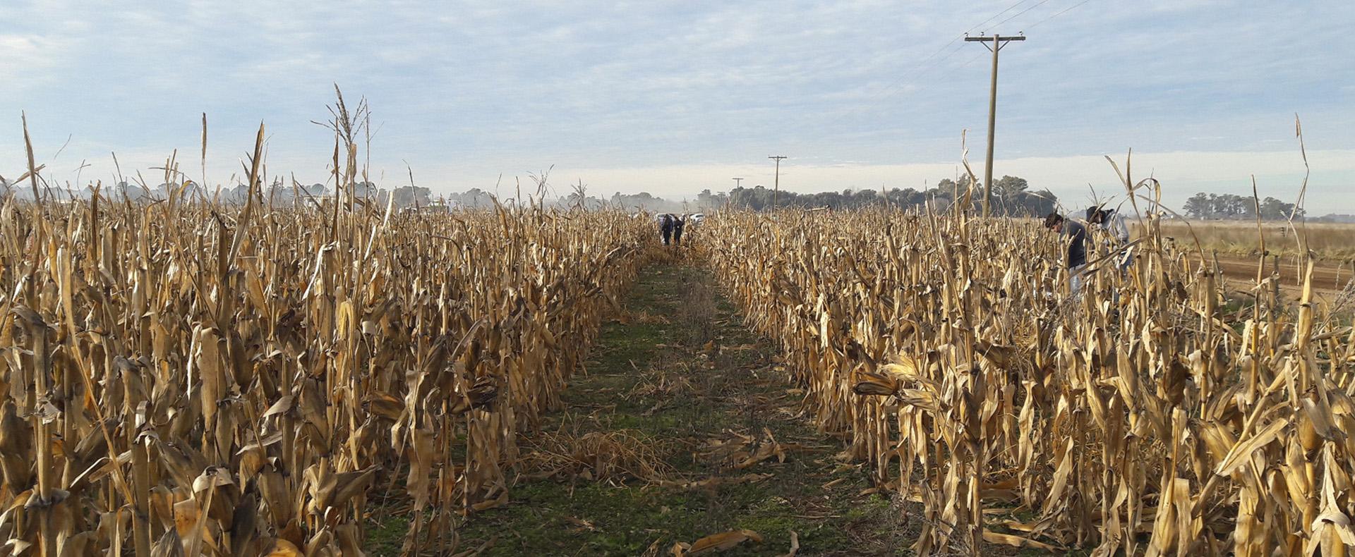 Producción Solidaria <ul> <li>Donando maíz, naranja o papa para cosechar en nuestros programas.</li> </ul>